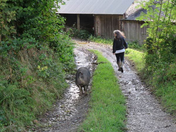 Debbie Kingsley walking down a farm track followed by a pig on a smallholder training course at South Yeo Farm West