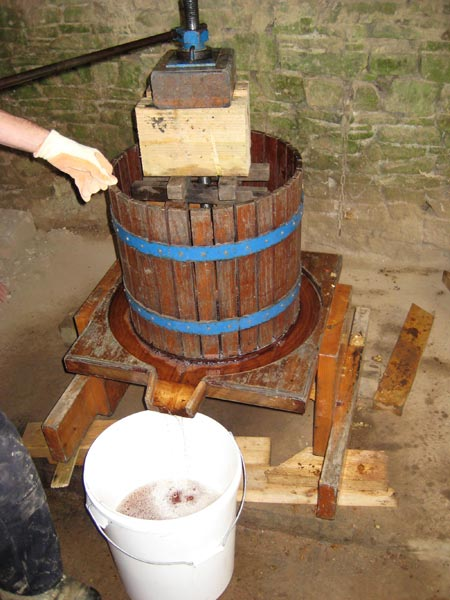 Pressing apples on the apple and cider day at South Yeo Farm West
