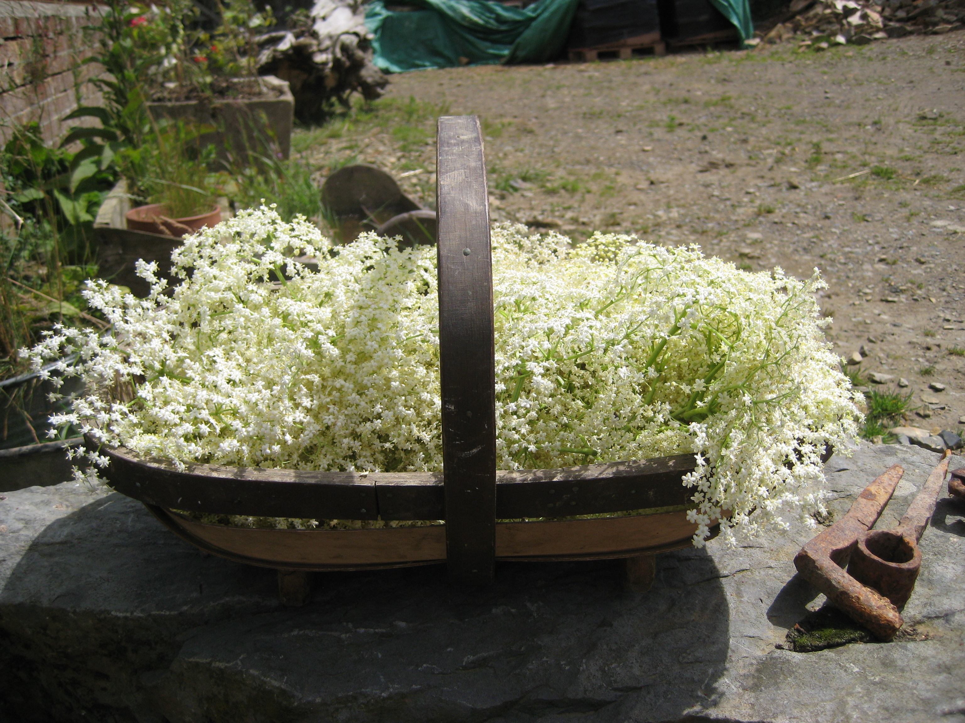 A woven basket full of elder flowers from a smallholder training course at South Yeo Farm West