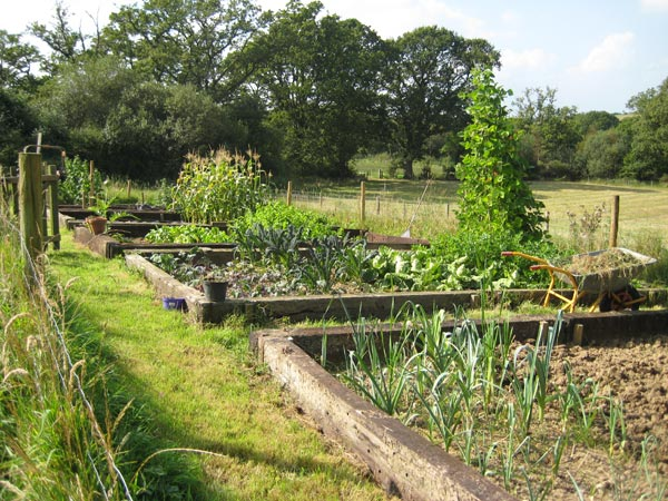 The vegetable garden at South Yeo Farm West in Devon